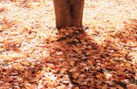 紅葉のイメージ 09508000376| 写真素材・ストックフォト・画像・イラスト素材|アマナイメージズ