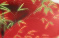 竹 8月上旬 09509000265| 写真素材・ストックフォト・画像・イラスト素材|アマナイメージズ