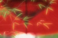 竹 8月上旬 09509000266| 写真素材・ストックフォト・画像・イラスト素材|アマナイメージズ