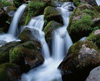 春 栂池の渓流 長野県