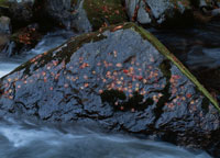 秋の渓流 09511000246| 写真素材・ストックフォト・画像・イラスト素材|アマナイメージズ