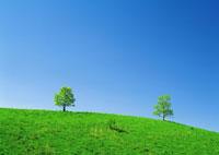 空、木、野原