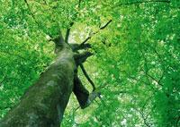 木、ローアングル