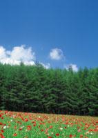 林、木、空、花