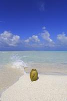 モルディブの砂洲(サンドバンク)とヤシの実と青空