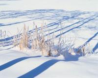 雪景色 10114000097| 写真素材・ストックフォト・画像・イラスト素材|アマナイメージズ