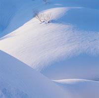 雪景色 10114000102| 写真素材・ストックフォト・画像・イラスト素材|アマナイメージズ