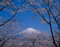 富士宮市 10114000191| 写真素材・ストックフォト・画像・イラスト素材|アマナイメージズ