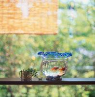 金魚 10114000238| 写真素材・ストックフォト・画像・イラスト素材|アマナイメージズ