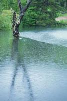 水面の枯れ木と雨