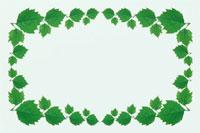 緑の葉の四角いフレーム