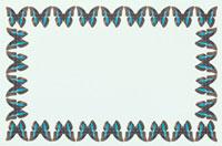 蝶の四角いフレーム 10120001275| 写真素材・ストックフォト・画像・イラスト素材|アマナイメージズ