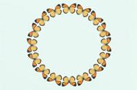 蝶の円のフレーム
