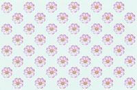 ピンクのコスモスのシート 10120001567| 写真素材・ストックフォト・画像・イラスト素材|アマナイメージズ