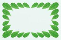 緑葉のフレーム 10120001626| 写真素材・ストックフォト・画像・イラスト素材|アマナイメージズ