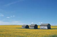 草原の小屋