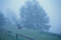 霧のかかった風景