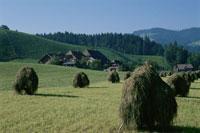 農場の干し草 ドイツ