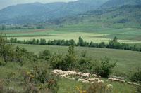 羊のいる田園風景 イギリス 10120002151| 写真素材・ストックフォト・画像・イラスト素材|アマナイメージズ