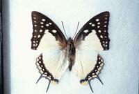 蝶 10120002301| 写真素材・ストックフォト・画像・イラスト素材|アマナイメージズ