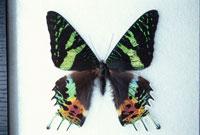 蝶 10120002302| 写真素材・ストックフォト・画像・イラスト素材|アマナイメージズ