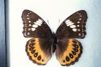 蝶 10120002303| 写真素材・ストックフォト・画像・イラスト素材|アマナイメージズ