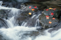 落ち葉と岩