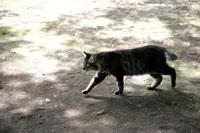 猫 10120003330  写真素材・ストックフォト・画像・イラスト素材 アマナイメージズ