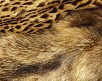 ヒョウとキツネの毛皮テクスチャ