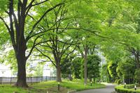 新緑の公園 10131017382| 写真素材・ストックフォト・画像・イラスト素材|アマナイメージズ