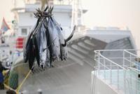 勝浦漁港に水揚げされたまぐろ