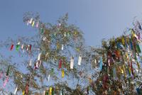 機物神社七夕祭り  10131018644| 写真素材・ストックフォト・画像・イラスト素材|アマナイメージズ