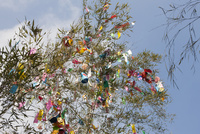 機物神社七夕祭り  10131018647| 写真素材・ストックフォト・画像・イラスト素材|アマナイメージズ