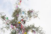 機物神社七夕祭り  10131018652| 写真素材・ストックフォト・画像・イラスト素材|アマナイメージズ