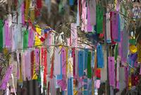 機物神社七夕祭り  10131018653| 写真素材・ストックフォト・画像・イラスト素材|アマナイメージズ