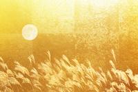 金屏風のススキと満月