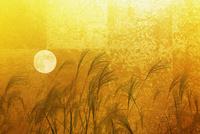 金屏風のススキと満月 10131021542| 写真素材・ストックフォト・画像・イラスト素材|アマナイメージズ
