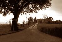イタリア トスカーナ地方の田舎道