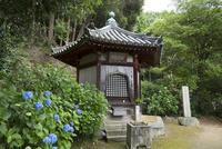 矢田寺の舎利堂と紫陽花