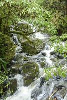 散策道の谷間を下る激しい流れ