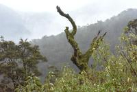 谷間から突き出た枯れた巨木