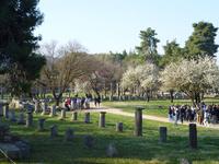 オリンピアの古代遺跡 10131037486  写真素材・ストックフォト・画像・イラスト素材 アマナイメージズ