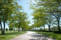 公園の並木道 10132001832| 写真素材・ストックフォト・画像・イラスト素材|アマナイメージズ