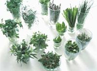 ハーブ類(緑色) 多種 10132002206  写真素材・ストックフォト・画像・イラスト素材 アマナイメージズ