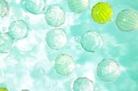 水に浮かぶボール