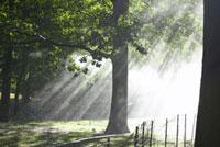 緑と木漏れ日