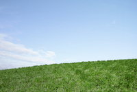 緑の芝生と青空