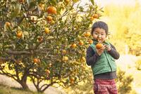 はっさくの木と男の子 10132113538| 写真素材・ストックフォト・画像・イラスト素材|アマナイメージズ
