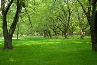 木漏れ日の風景 10134000470| 写真素材・ストックフォト・画像・イラスト素材|アマナイメージズ