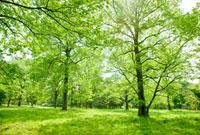 新緑の林 10134001673| 写真素材・ストックフォト・画像・イラスト素材|アマナイメージズ
